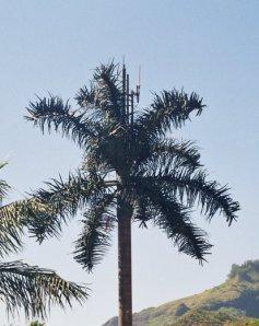 antenna-telefono-in-forma-di-palma1