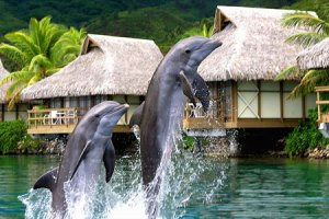 Image result for moorea dolphin center