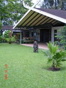 museo-gauguiin