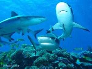 squali-a-tikehau