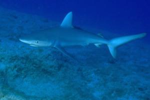 squalo-a-rangiroa
